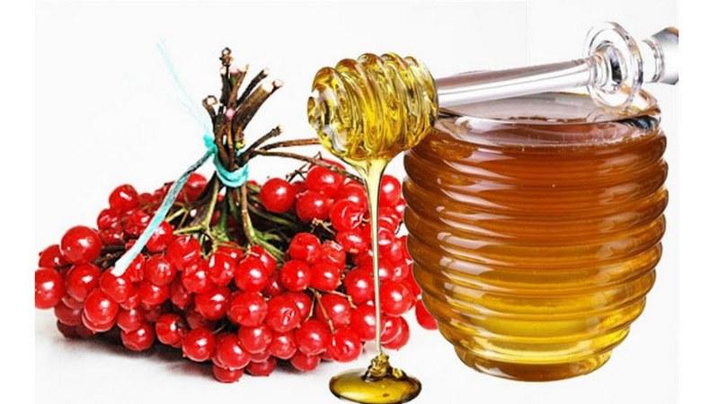 Калина с медом при простуде