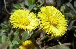 Лекарственные травы от кашля и бронхита — список