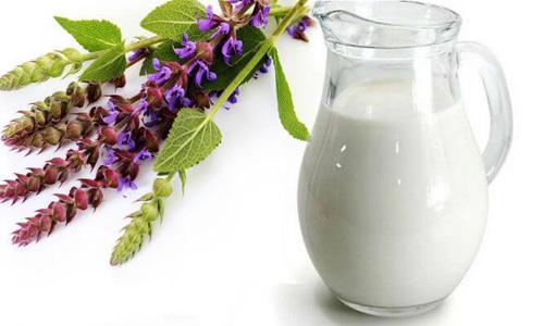 Рецепты с шалфеем и молоком