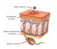 Вирус герпеса 7 типа у человека — причины его появления и лечение